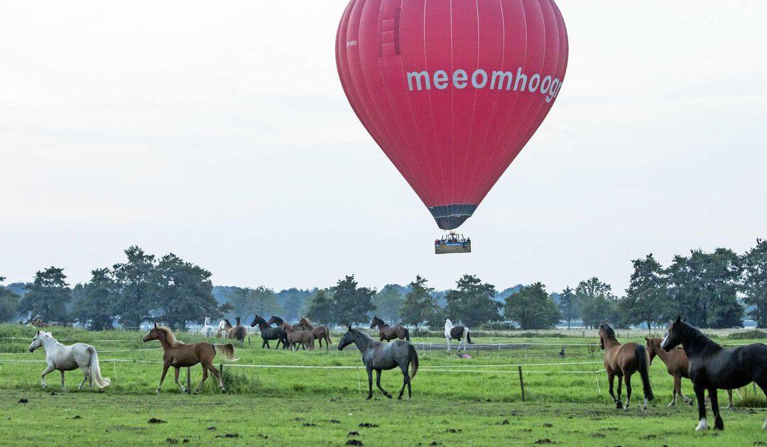 Ballonvaarder draait op voor late dood van paard