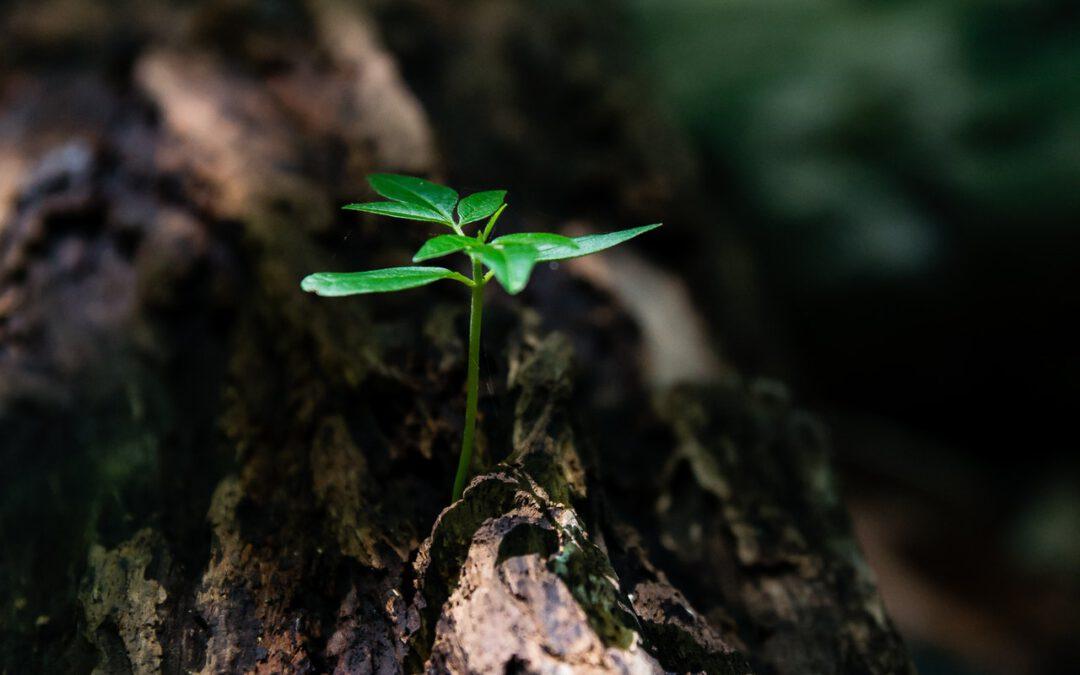 3 veelgestelde vragen over milieumanagement