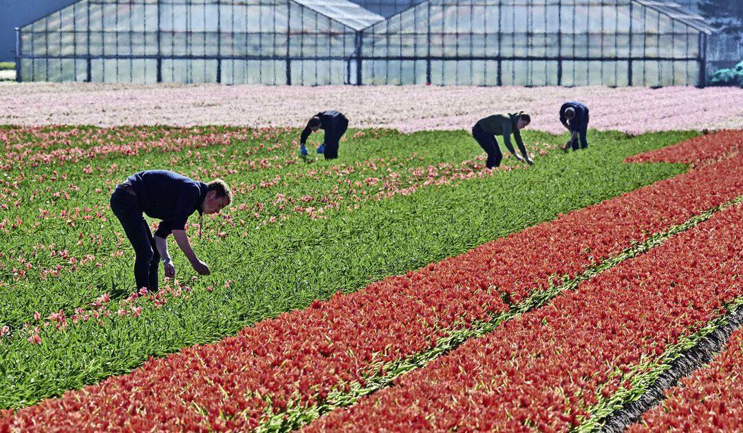 ABN: bloemenbranche tussen hoop en vrees na opheffen lockdowns